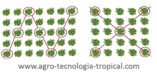 Toma de muestras foliares en cítricos