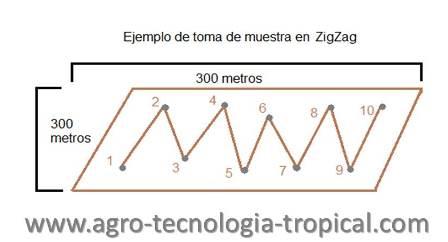 Toma de muestra de suelo en zigzag para análisis de fertilidad