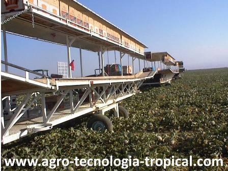 Cosechadora para melones en California USA