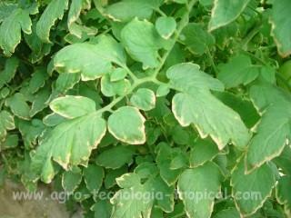 Potasio en sustratos en invernaderos hidroponia y ecologicos for Potasio para plantas