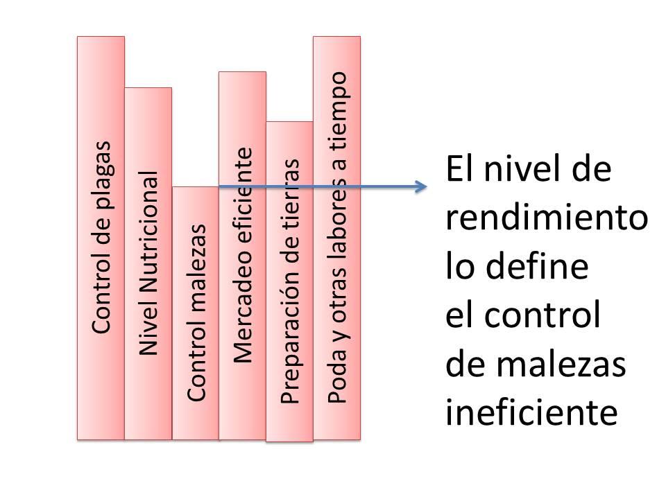 El factor limitante puede ser por clima control de malezas plagas o enfermedades