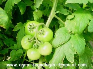 la poda mejora las condiciones microclimaticas del cultivo