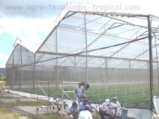 Movimiento del aire caliente en los invernaderos for Importancia de un vivero