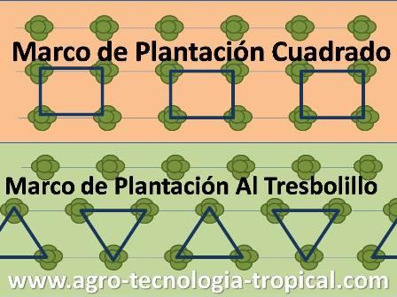 la densidad de siembra de los cultivos
