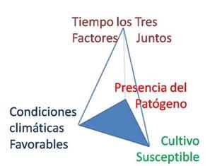 El clima es uno de los vertices de la piramide de la enfermedad