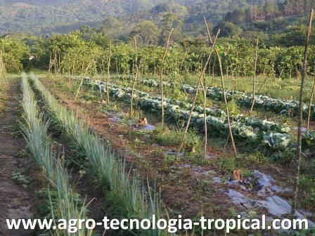 Rotaci n de cultivos en el tr pico Asociaciones de cultivos favorables