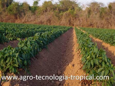 Buena implementacion de nuestro emprendimiento permite lograr suelos bien regados
