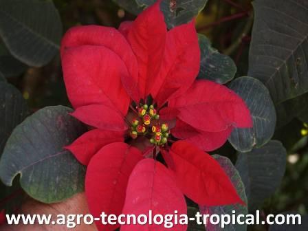 la duración del día produce inducción de la floracion